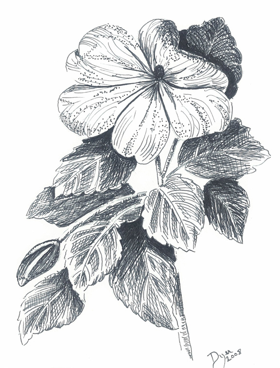 Pictures of Simple Pen And Ink Drawings Of Flowers - #rock-cafe