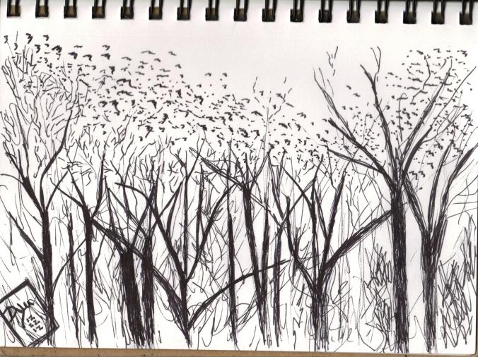 Mason Farm blackbirds