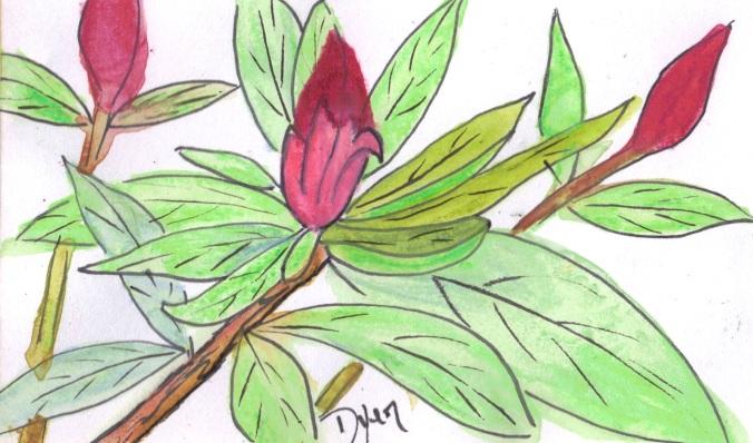 Azaelia buds