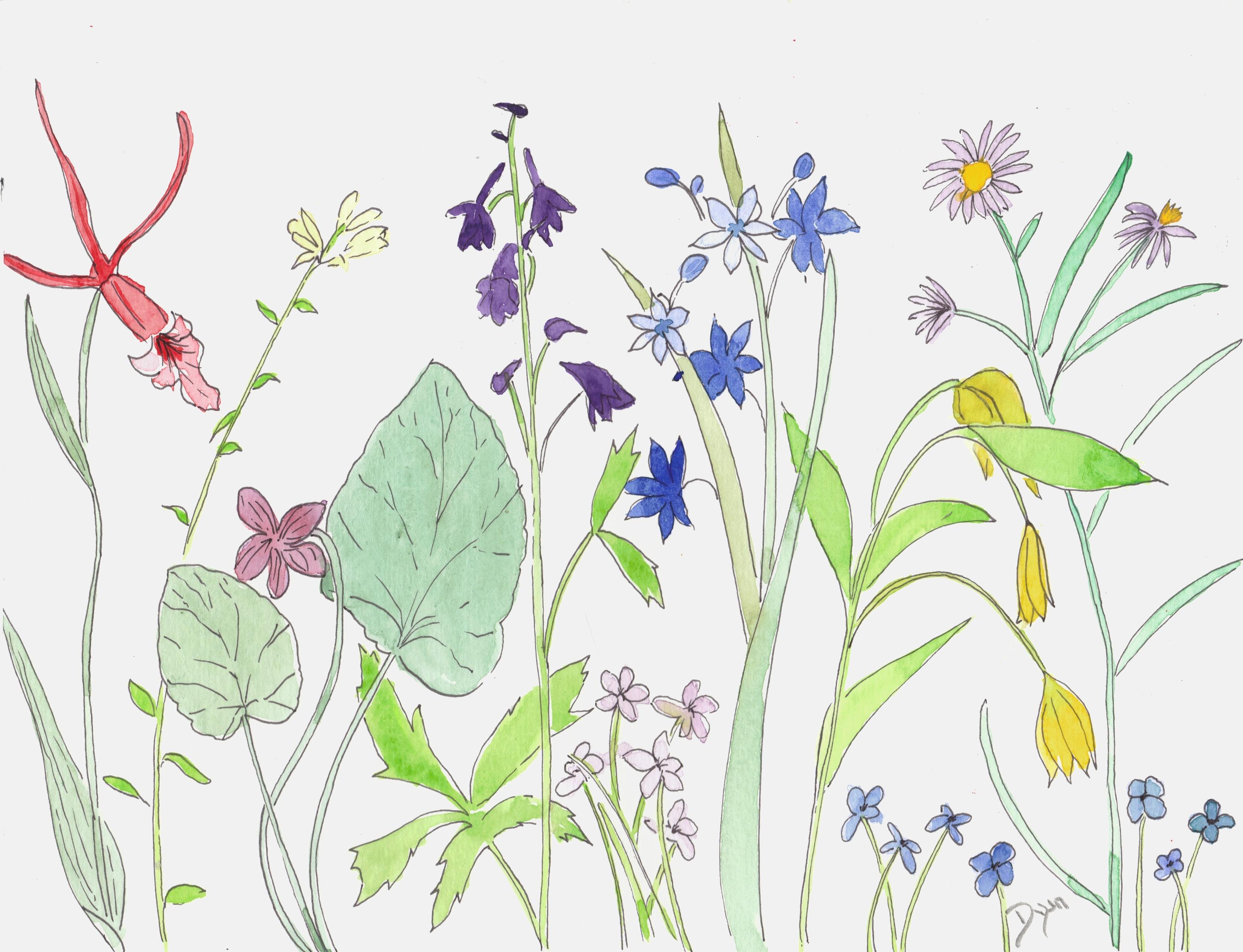 Wildflower Parade I
