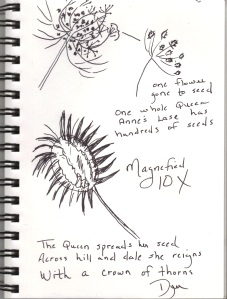 sketchbook Queen Anne's Lace