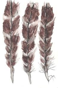 Feathers Dec