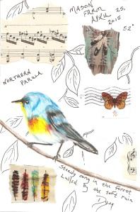 Art journal Northern Parula