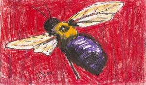index card bee