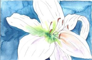 White Lillies.jpg