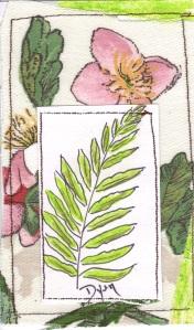 ICAD 25 botanic organic