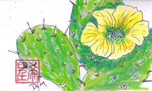 ICAD 41 Prickly Pear