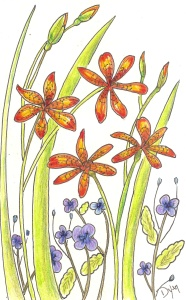 Art Rx blackberry lily color 72