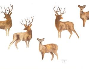 Deer II