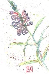 Obediance Plant