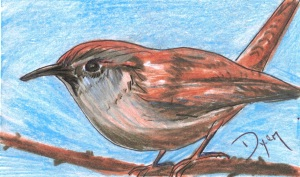 Index card Carolina Wren