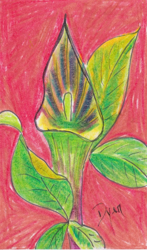 Index card Jack in Pulpit