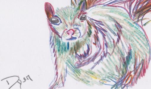 Index card squirrel
