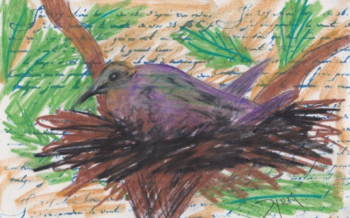 Index card morning dove