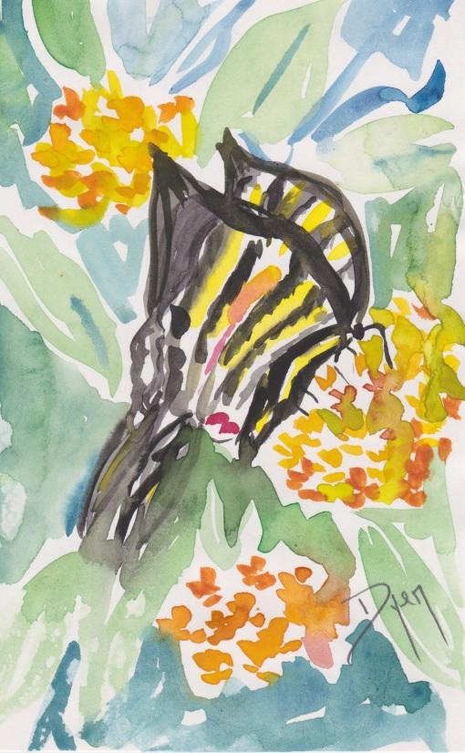 Butterfly lantana 1