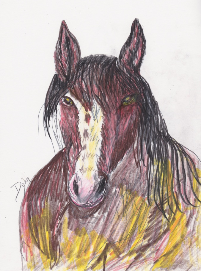 Horse colored pencil