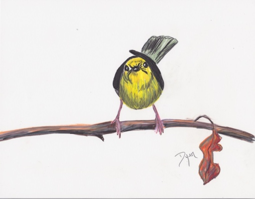 Warbler 72
