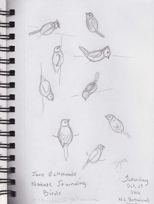 birds-sketches