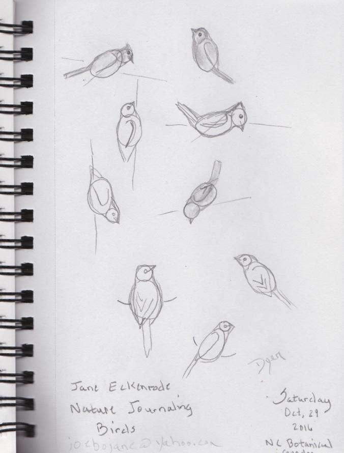 birds-sketches