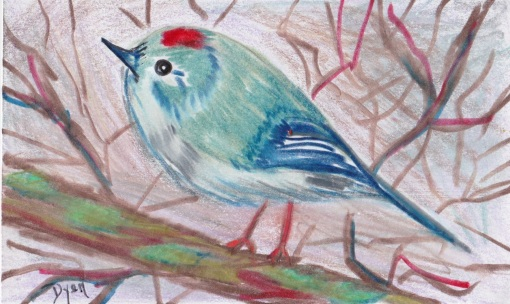 Bird ruby crowned kinglet.jpeg