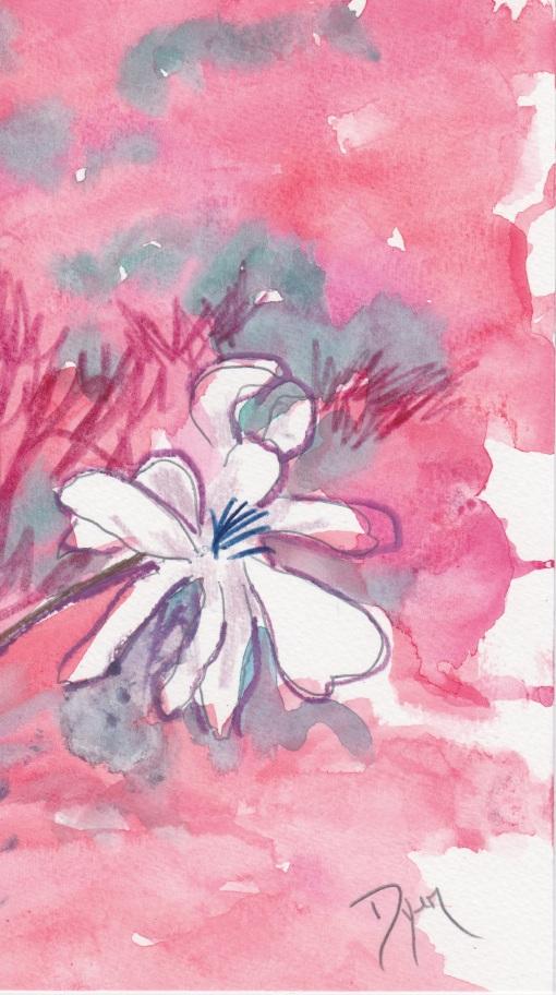 February shrub II.jpeg