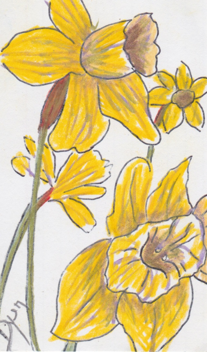 Index card daffodil 2.jpeg