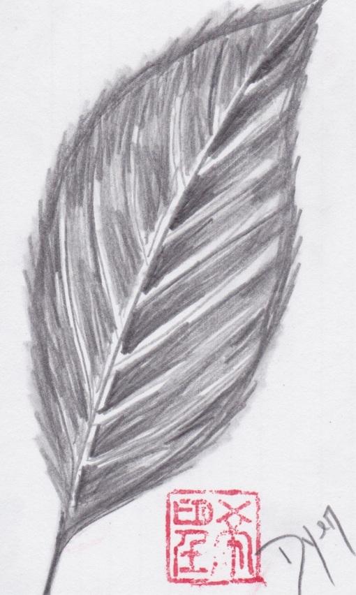 Index card leaf graphite.jpeg