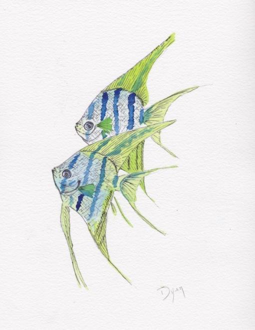 Fish Angel 600 72.jpg