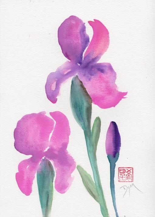 Iris 72.jpg