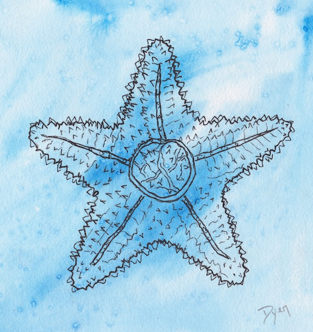 Coastal Starfish 600 copy