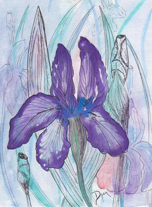 Floral 2018 Purple Iris